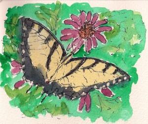 480 butterfly