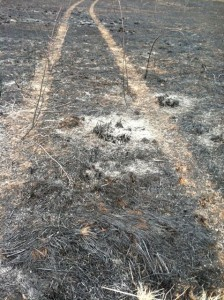 BYE tire tracks