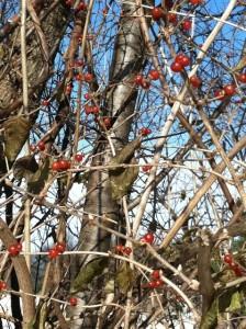 berries high relief