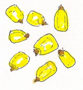 corn kernels real