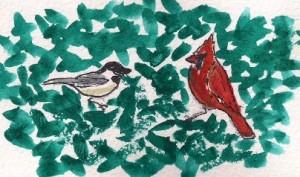 blue spruce birds